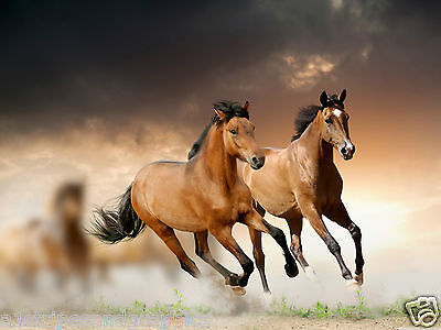 $ CDN72.49 • Buy Brown Horse Stalion Mustang #2 Wall RV Trailer Mural Decal Decals Graphics