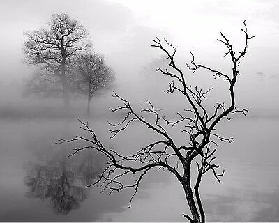 $19.75 • Buy Tree Art Photo Print Gray Black White Fog Wall Art Home Decor Picture Matted