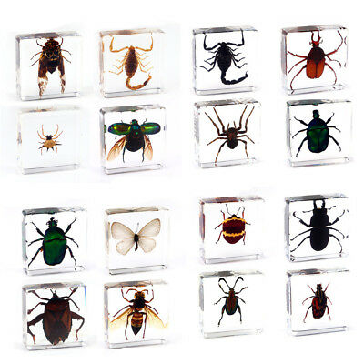 $4.59 • Buy Spider Butterfly Scorpion Insect Specimen In Clear Resin Paperweight Specimen
