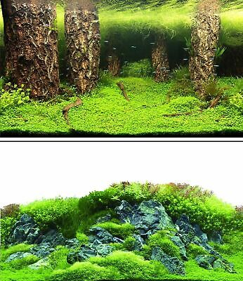 AU19.56 • Buy Aquarium Fish Tank Background Double Sided 31  / 80cm High - 2 To 10 FT Lengths