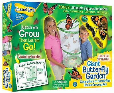 Insect Lore GIANT Live Butterfly Garden Hatching Kit • 24.95£
