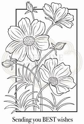 Woodware Cosmos Collection Clear Stamp Set By Jane Gill JGS708 • 6£