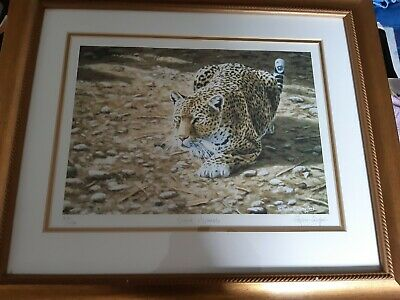 Stephen Gayford  Silent Approach Framed LEOPARD Print Limited Edition • 15£