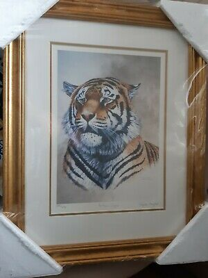 STEPHEN GAYFORD FRAMED PRINT   Indian Tiger   • 20£