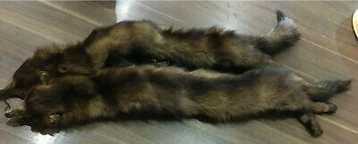 Vintage Fox Fur Stole - Circa 40's. Pair Of Foxes - Excellent Condition. • 9.95£