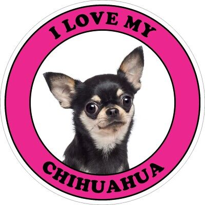 £2.99 • Buy 2x I LOVE MY CHIHUAHUA Black & Tan Dog Decal Stickers - Choice Of Colour & Size