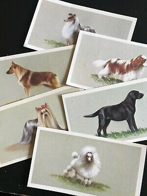 £4.80 • Buy Grandee Cigar Top Dogs Collection John Player Cigarette Cards Series Of 25