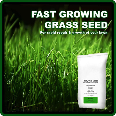 £17.69 • Buy Fast Growing Rapid Lawn Recovery Grass Seed Amazing Quick Repair Pets 1kg