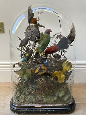 £1500 • Buy Fourteen Exotic Taxidermy Birds In Glass Dome, Antique Victorian Circa 1885