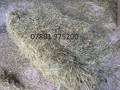£4 • Buy Small Bale Hay (Conventional Bales)