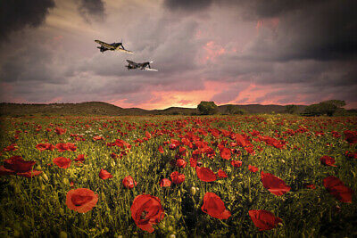 £49.99 • Buy Spitfire Canvas Print. BBMF Fighters Poppies Poster/Canvas Free Delivery