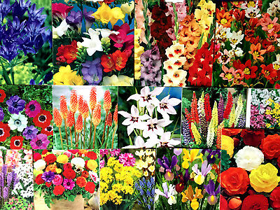 Mixed Beautiful Garden Flowers Bulbs Spring Summer Perennial Plant-quality Pack  • 7.99£