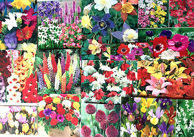 Garden Flowers Bulbs Spring Summer Perennial,easy To Grow Quality Pack,labels • 7.99£