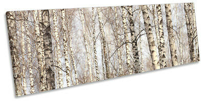 £84.99 • Buy Forest Birch Trees Trunks Framed PANORAMA CANVAS PRINT Wall Art