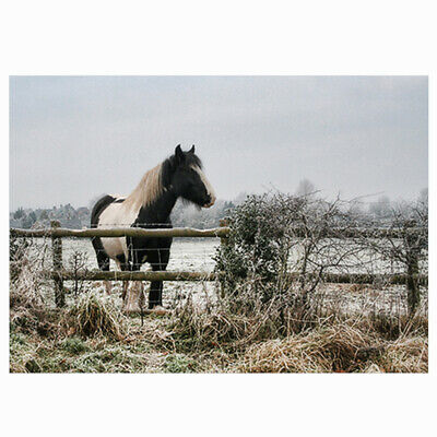 £6.99 • Buy 10 Equestrian Christmas Cards - Frosty - Single Design - Horse Art