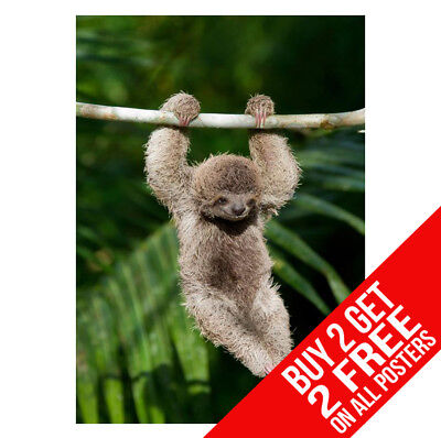 £6.99 • Buy Baby Sloth Poster Bb1 Print A4 A3 Size -buy 2 Get Any 2 Free
