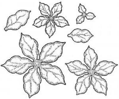 £6.45 • Buy CREATIVE EXPRESSIONS Cut Mounted STAMPS TO DIE Sue Wilson SHADED POINSETTIA 634