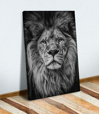 £12.99 • Buy Lion Head Black And White Canvas Wall Art Print Artwork Strength Courage