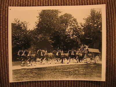 $ CDN130.34 • Buy Eight Horse Clydesdale Hitch Budweiser Wagon St. Louis Missouri Original Photo