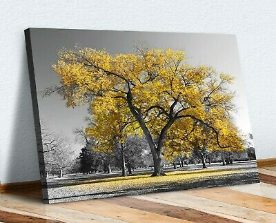Large Tree Yellow Leaves Black White Canvas Wall Art Picture Print 30mm Deep • 12.99£