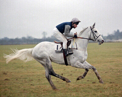 £12.50 • Buy Desert Orchid 20 Ridden By Colin Brown (horse Racing) Photo Prints-mugs