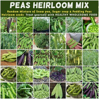 AU1.99 • Buy PEA Heirloom Mix 15+ Seeds Vegetable Garden ALL TYPES MIXED Snow Peas Shelling