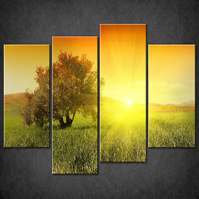£37.63 • Buy Sunrise Olive Tree Canvas Print Picture Wall Art Home Decor Free Delivery