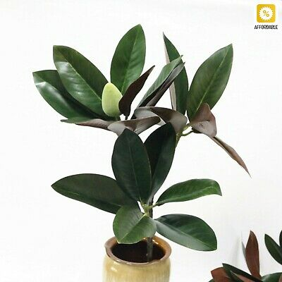 $23.09 • Buy Magnolia Leaf Artificial Simulation Real Touch 3 Branch Magnolia Flower Decor