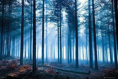 Tom Mackie : Forest - Maxi Poster 91.5cm X 61cm New And Sealed • 7.99£