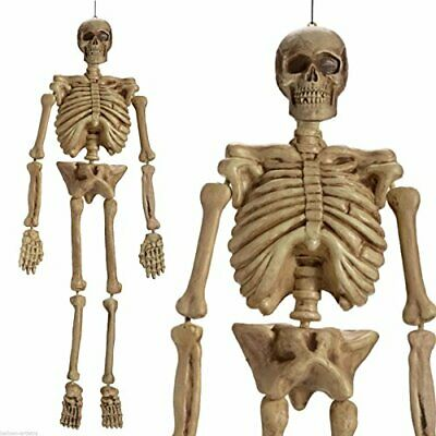 $37.15 • Buy Realistic Hanging Skeleton 5ft Life Size Halloween Decoration Prop