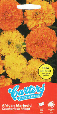 Double African Marigold CRASKERJACK 50 Flower Seeds/For Beds Borders 2022 SALE • 3.19£
