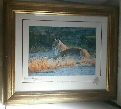 African Evening Signed Limited Edition  Framed Print Stephen Gayford With Coa  • 19.99£