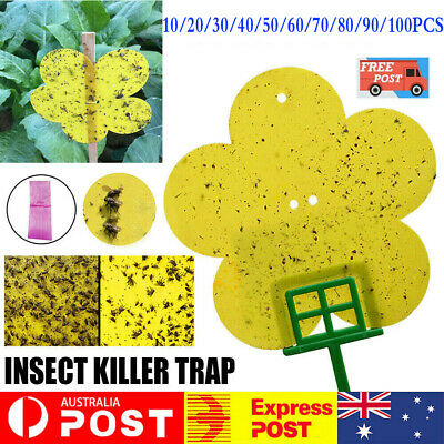 AU8.95 • Buy Yellow Flower Sticky Trap Insect Killer Whitefly Thrip Fruit Fly Gnat Leafminer