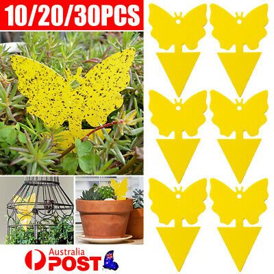 AU10.99 • Buy Strong Glue Plant Dual Sided Sticky Traps Non Toxic For Aphids Fruit Fly Yellow