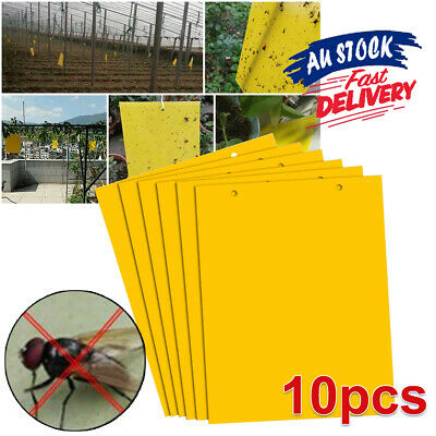 AU12.55 • Buy 10Pcs Whitefly Thrip Fruit Fly Gnat Leafminer Trap Sticky Insect Killer Yellow