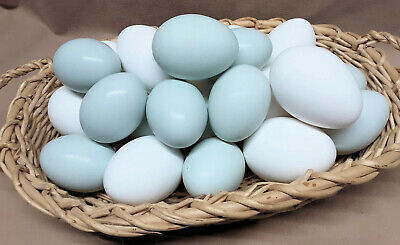 £7.10 • Buy Duck Egg Shells Clean Blown Hollow For Crafts 1-Hole - Set Of 6