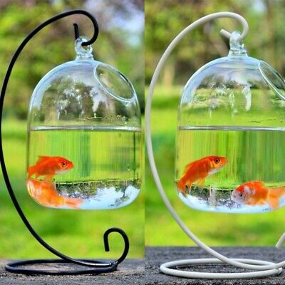 AU27.53 • Buy Creative Hanging Glass Vase Fish Tank Bowl Terrarium With Bent Stable Stand