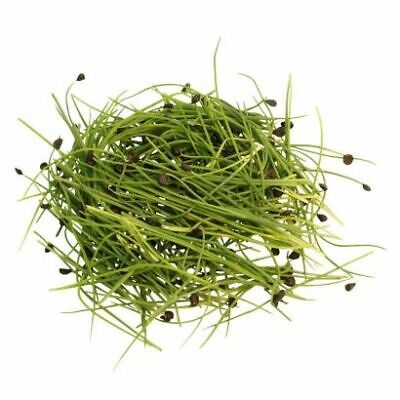£7.50 • Buy  Organic Garlic Chives Sprouting Seeds - Microgreen Sprouts- 100g