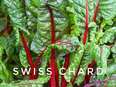 100 Swiss Chard Red Seeds Spinach Cabbage Brocolli 25 Clusters Rhubarb Vegetable • 1.49£