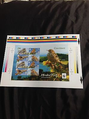 GUERNSEY WWF MEADOW PIPIT IMPERFORATE Miniature Sheet Limited Edition Of 500 • 24.95£