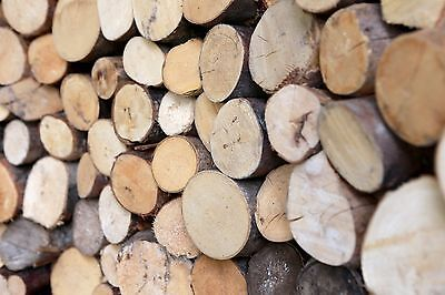 £12 • Buy Kiln Dried Decorative Display Hardwood Round Logs - Collection Only