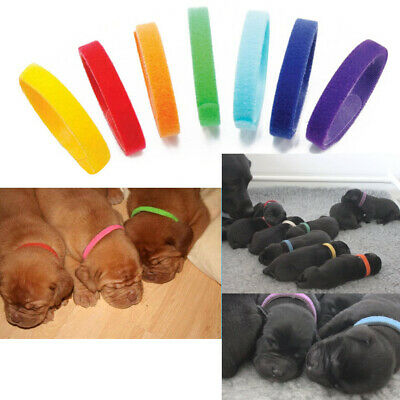 £4.26 • Buy 12 Colors Nylon Puppy Litter Identification Snap Collars ID Identification Bands
