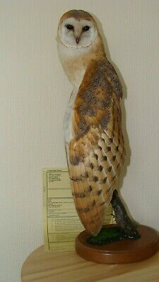 £310 • Buy BARN OWL  Tyto Alba WINGS  DOWN AND OPEN    ON BASE WITH 10 CERTIFICATE