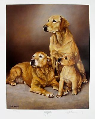 £21.47 • Buy NIGEL HEMMING YELLOW LABRADOR LAB DOGS Hand Signed Limited Edition Lithograph