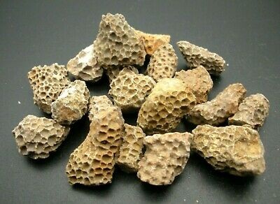 £6.99 • Buy Small Sets Of Fossilised Coral Fragments In Great Condition 50 Grams Minimum