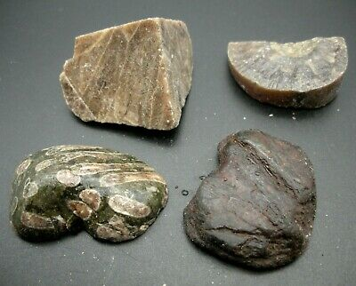 £5.99 • Buy Sets Of Natural Fossilised Coral, Turtle Bone And Ray Plates, 50 Grams Minimum