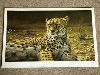 £15 • Buy Stephen Gayford Signed Print Cheetah (Ever Watchful) With Certificate