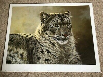 £15 • Buy Stephen Gayford Signed Print Snow Leopard (Regal Presence) With Certificate