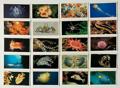 £0.99 • Buy Players Grandee Cigar Cards 'THE LIVING OCEAN' - Complete Set Of 30