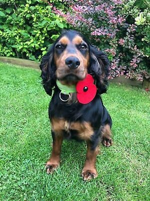 £1.50 • Buy Remembrance Felt Poppies With Bobble Collar Mount For Dogs Or Any Animal, Red, P